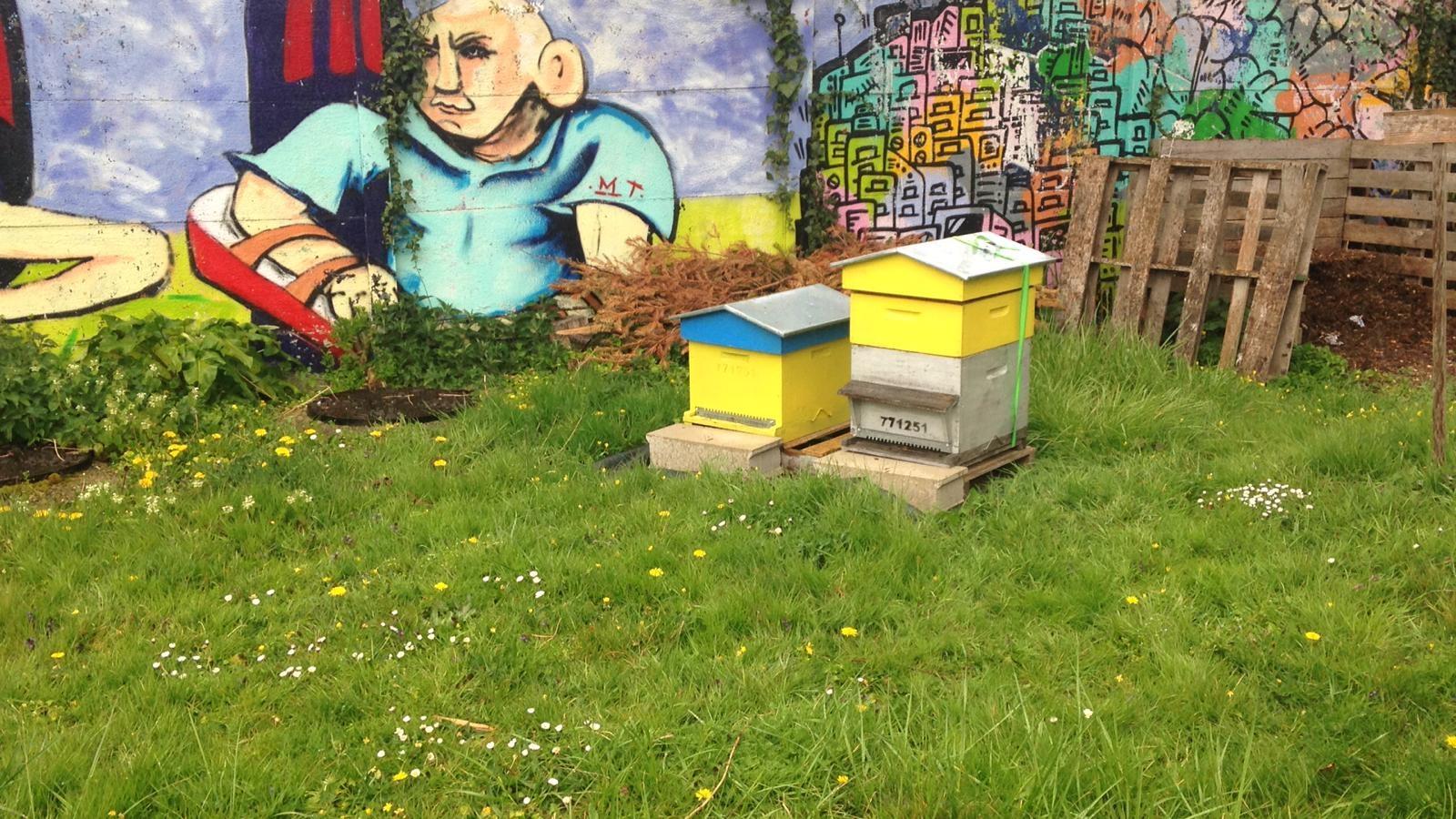 photo de 2 ruches
