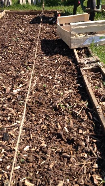 Plantation-pomme-de-terre-Alienor-2020-03-26-at-11.46.58